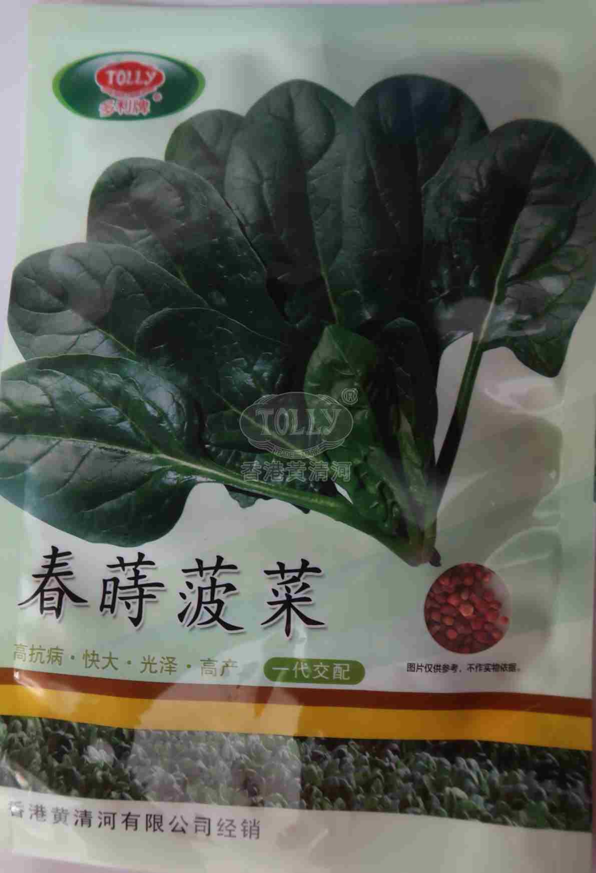 春莳菠菜――菠菜