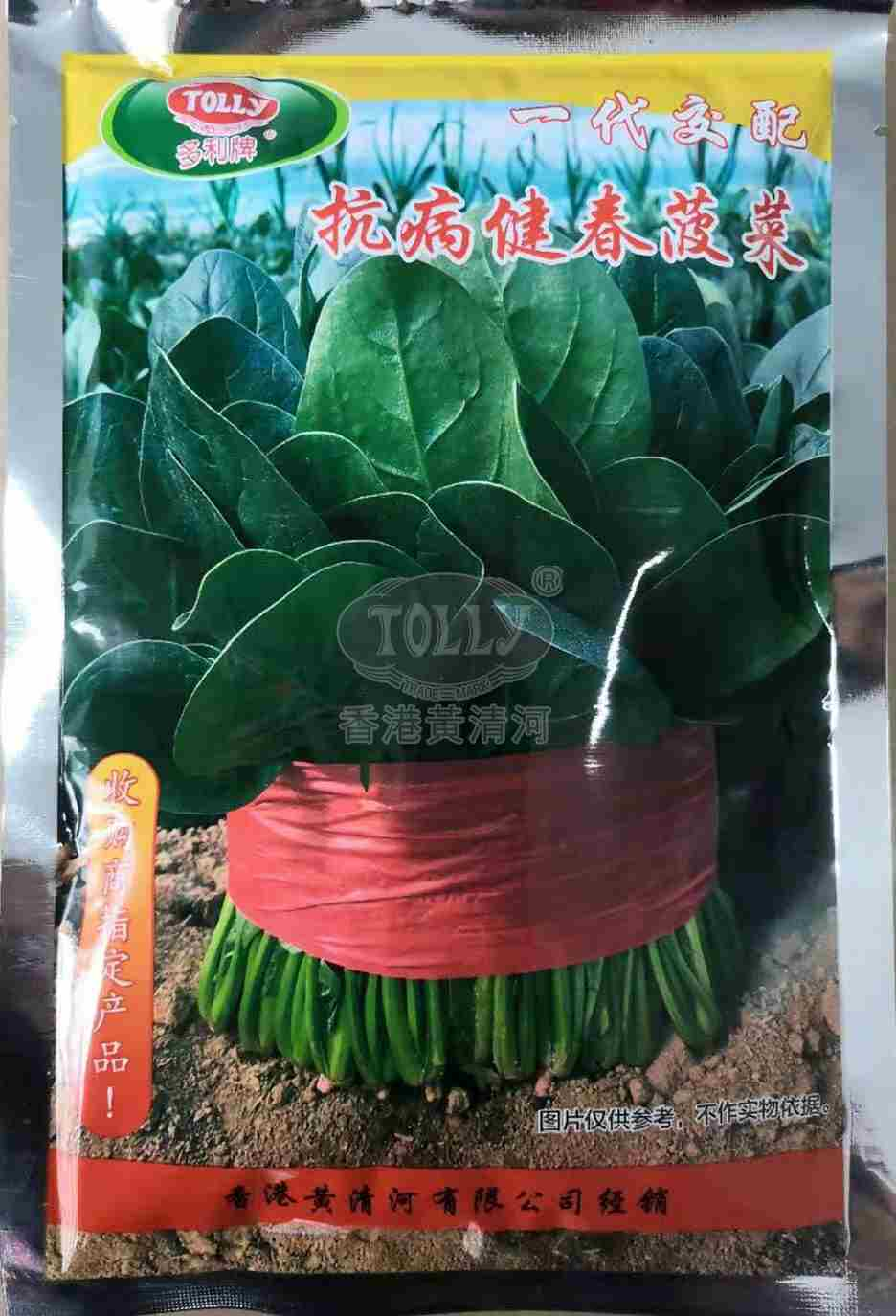 抗病健春菠菜――菠菜